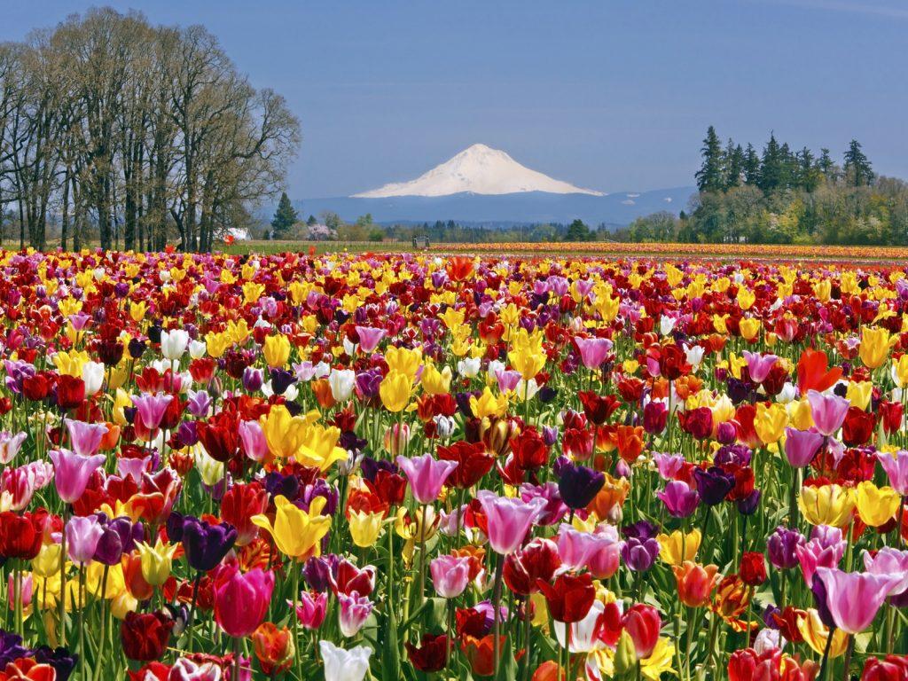 Menakjubkan Ladang Ladang Bunga Terindah Di Dunia Ini Membuatmu Seperti Di Dunia Khayalan Blog Unik