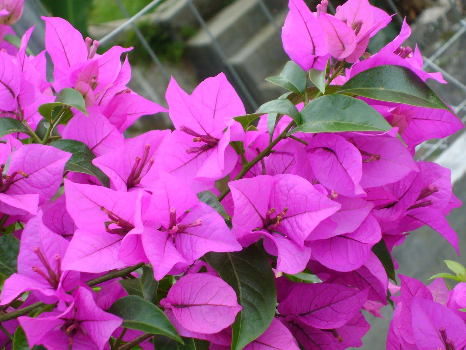 Populer 34 Gambar Bunga Kertas