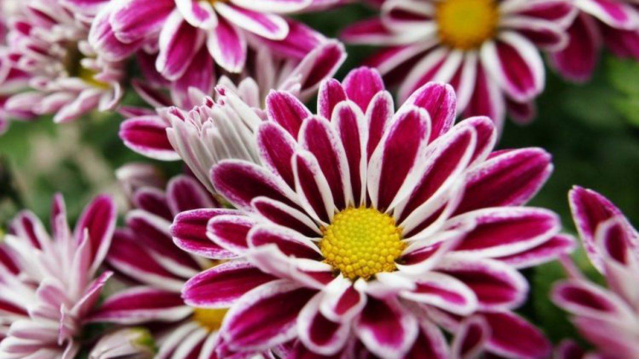 23 Jenis Bunga Terindah Di Dunia Yang Mampu Membuatmu Jatuh