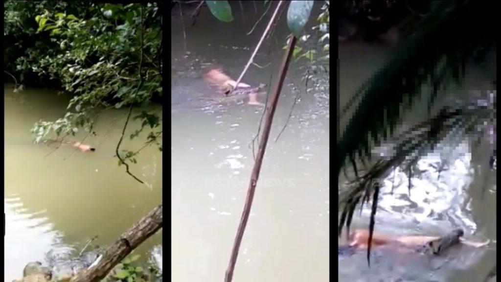 Mengerikan !!!, Buaya menyerang manusia kembali terjadi di Kalimantan