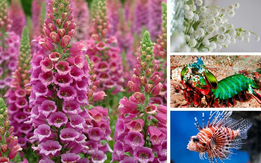 70+ Gambar Gambar Hewan Cantik Terbaru