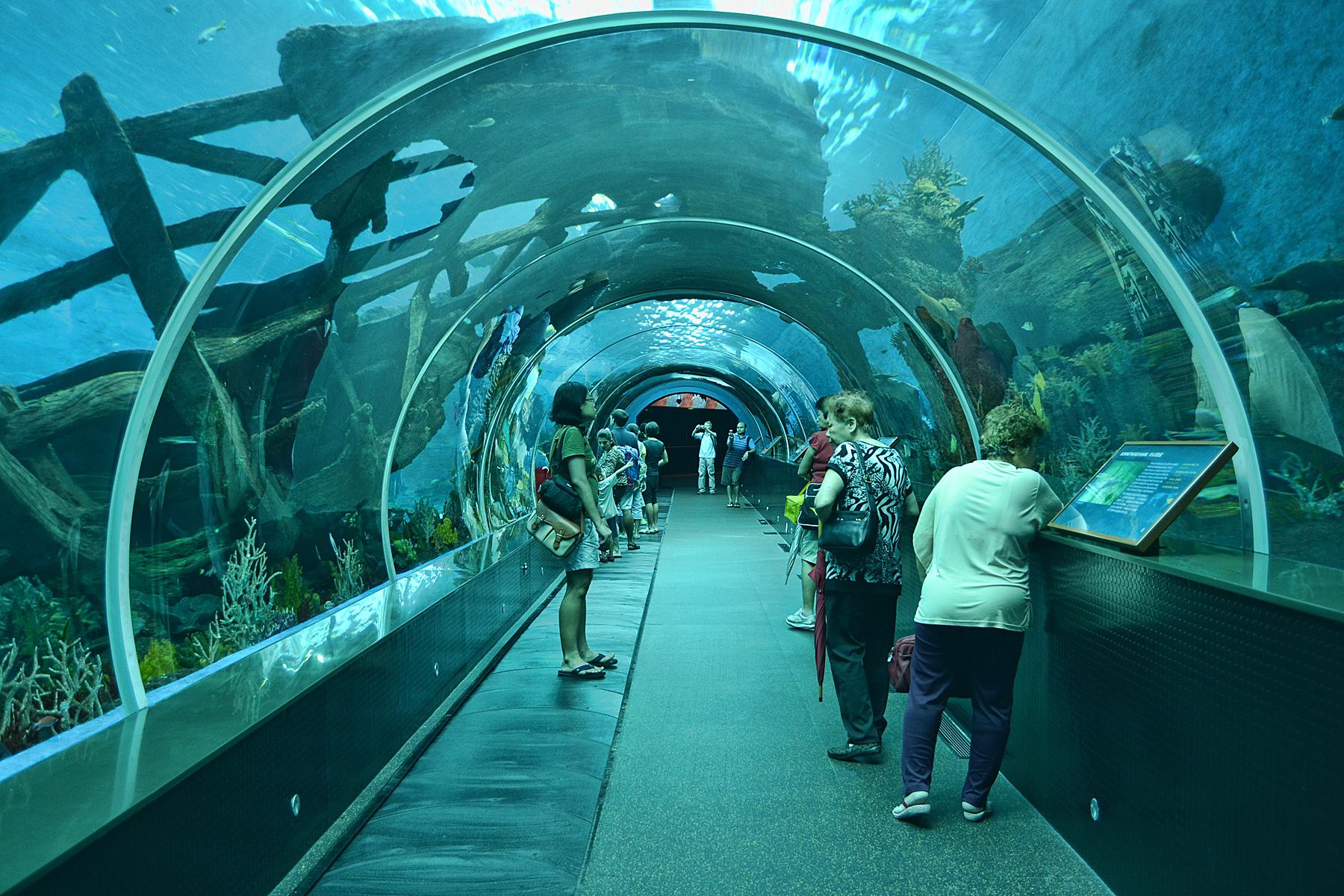 Marine Life Park 1 Blog Unik Tiket Sea Aquarium Singapore