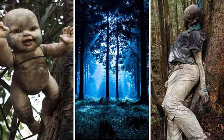 10 Hutan Paling Mengerikan di Dunia