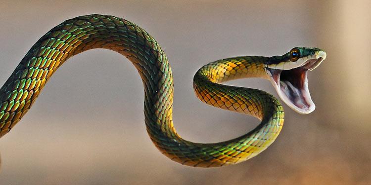 Mitos Tentang Kehadiran Beberapa Hewan Beserta Artinya - Ular