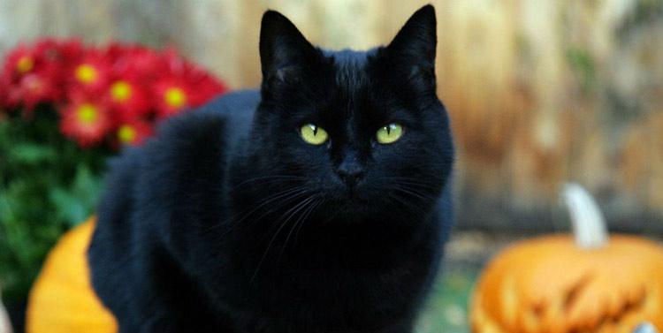 Mitos Tentang Kehadiran Beberapa Hewan Beserta Artinya - Kucing