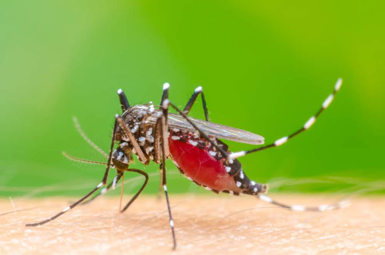 Binatang Kecil yang Memiliki Kemampuan Membunuh Sangat Mematikan Nyamuk