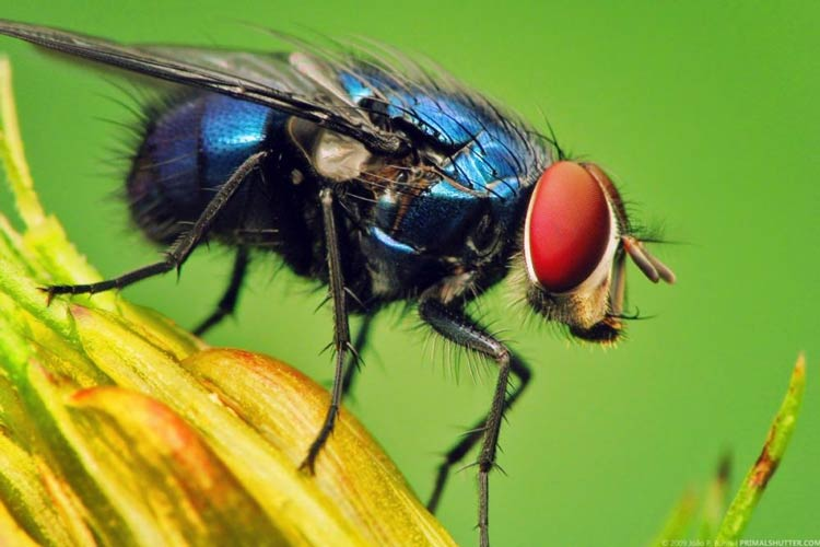 Binatang Kecil yang Memiliki Kemampuan Membunuh Sangat Mematikan Lalat