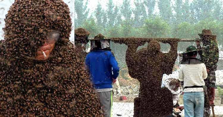 Berbagai Jenis Lomba Terunik di Dunia Lomba dikerubung Lebah