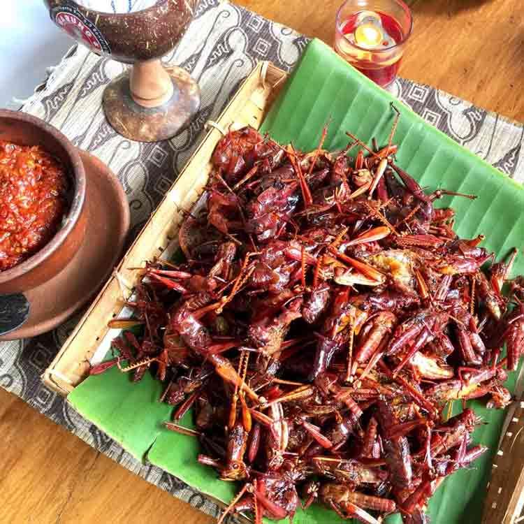 Makanan dan Minuman Khas Jogjakarta - Belalang goreng