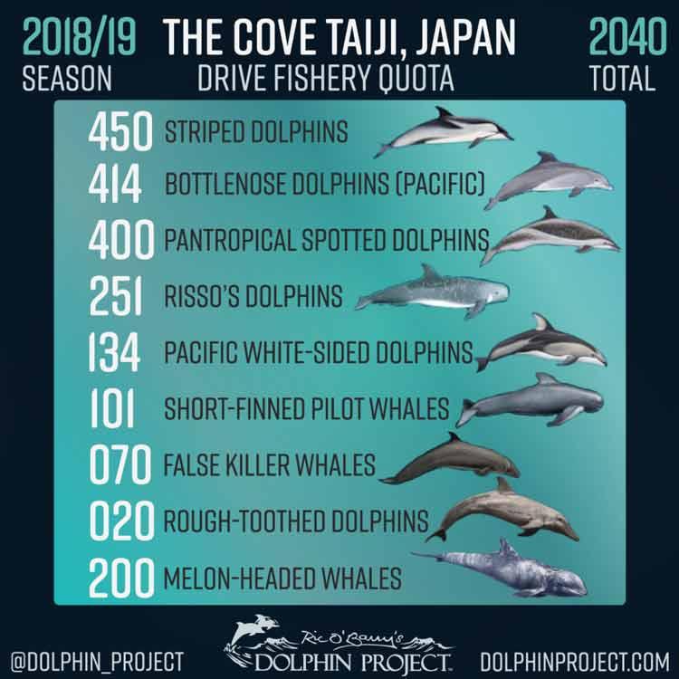 Mengerikan! Fakta Seputar Tradisi Pembantaian Lumba-Lumba di Jepang - Berbagai macam lumba-lumba mengalami pembantaian