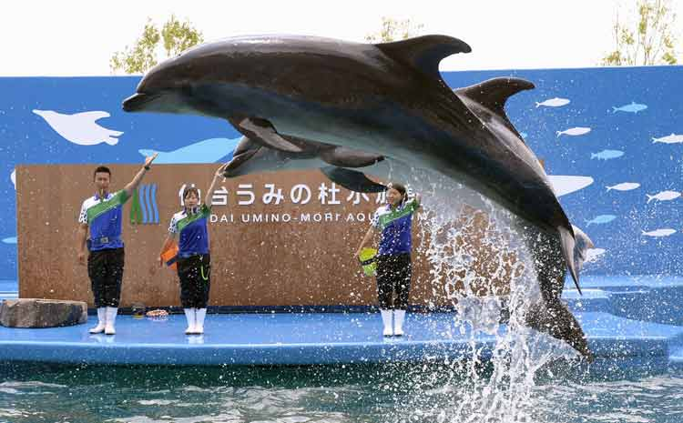 Mengerikan! Fakta Seputar Tradisi Pembantaian Lumba-Lumba di Jepang - Nasib lumba-lumba yang diburu