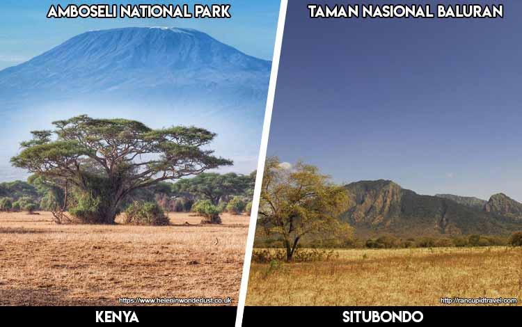 Tempat Wisata Di Indonesia Yang Mirip - Amboseli National Park dan Taman Nasional Baluran Situbondo