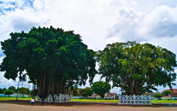 Pohon Yang Dipercaya Banyak Makhluk Halusnya - Pohon Beringin