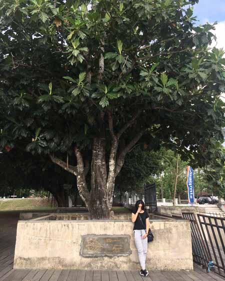 Pohon Yang Dipercaya Banyak Makhluk Halusnya - Pohon Sukun