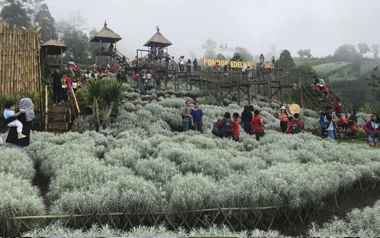 Tempat Wisata Terbaru Di Bali - Pondok Edelweis
