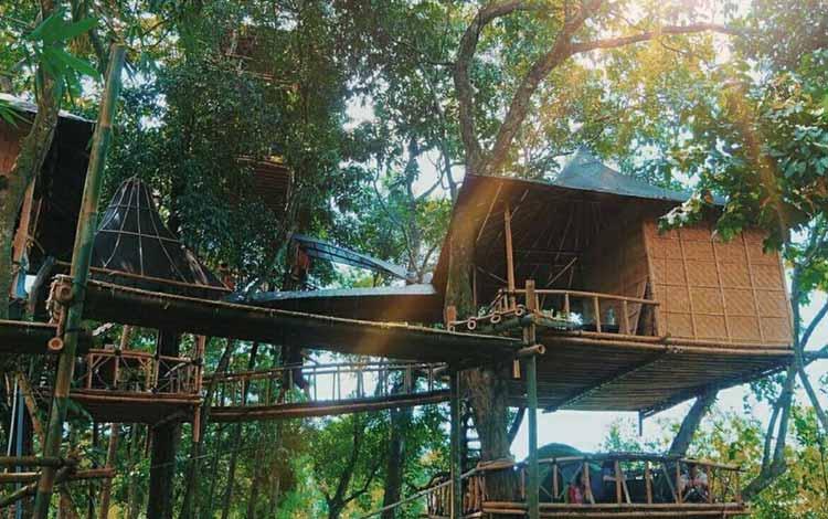 Tempat Wisata Terbaru Di Bali - Rumah Pohon Temega