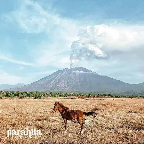 Tempat Wisata Terbaru Di Bali - Savana Tianyar