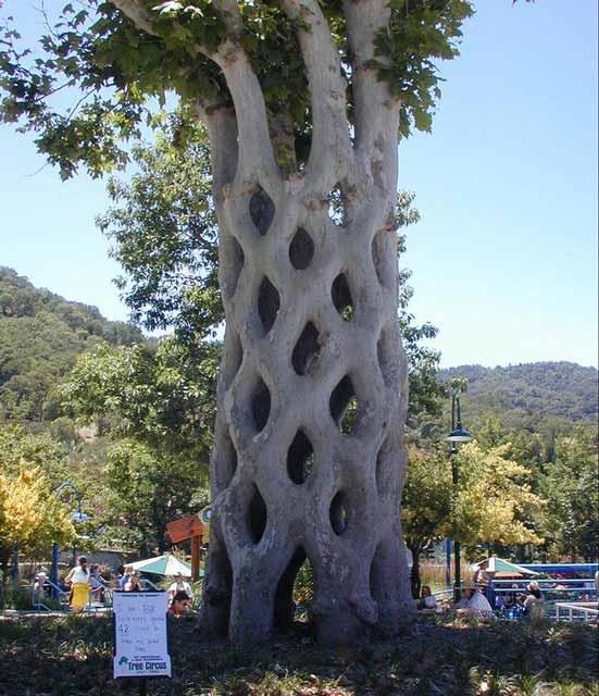 Berbagai Pohon Terunik Di Dunia Yang Bakalan Membuat Kita Berdecak Kagum - Pohon Circus