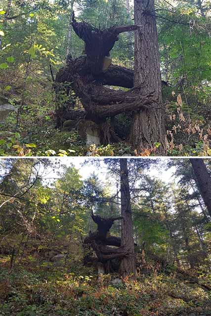 Berbagai Pohon Terunik Di Dunia Yang Bakalan Membuat Kita Berdecak Kagum - Pohon Devil