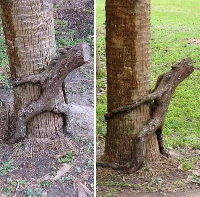 Berbagai Pohon Terunik Di Dunia Yang Bakalan Membuat Kita Berdecak Kagum - Pohon Naik Pohon