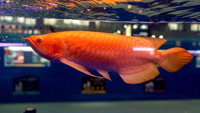 Berbagai Peluang Bisnis Budidaya Ikan Dengan Pendapatan Hingga Ratusan Juta Rupiah Blog Unik