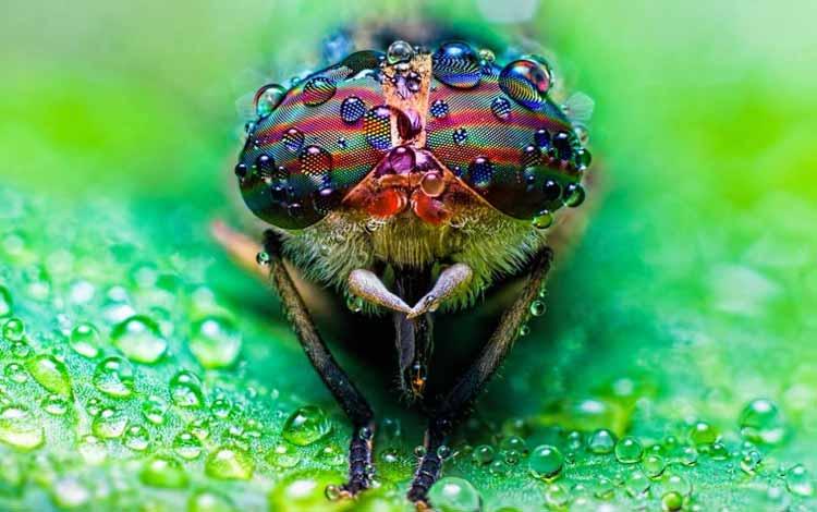 Serangga dan Kuman Dengan Wajah Menyeramkan Jika Dilihat Secara dekat - Horsefly