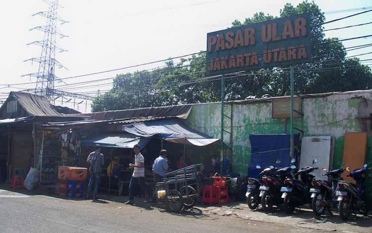 Surga Tempat Belanja Fashion Yang Murah Di Jakarta - Pasar Ular