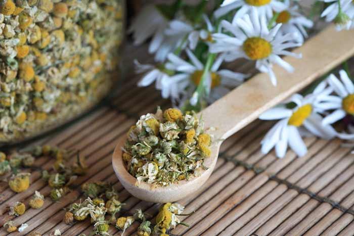 Cara Ampuh Mengurangi Rambut Rontok Secara Alami - bunga chamomile