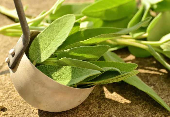 Cara Ampuh Mengurangi Rambut Rontok Secara Alami - daun sage