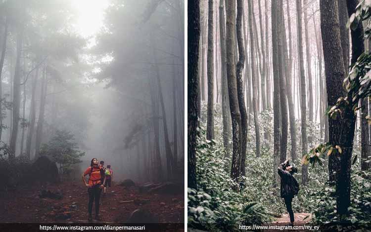 Tempat Wisata Terbaik di Bogor Yang Instagramable - Gunung Pancar