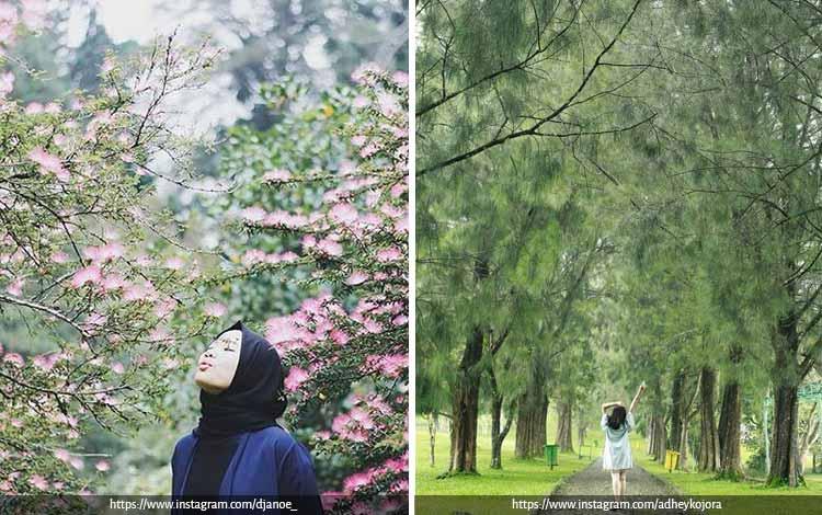 Tempat Wisata Terbaik di Bogor Yang Instagramable - Kebun Raya Cibodas