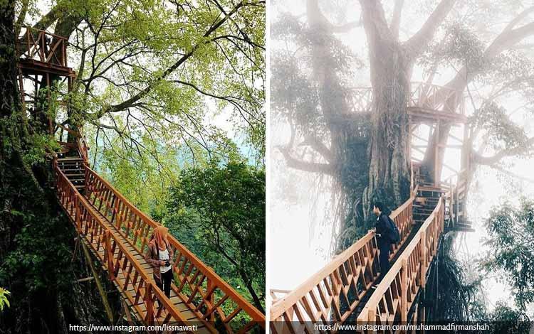 Tempat Wisata Terbaik di Bogor Yang Instagramable - Rumah Pohon dan Jembatan Gantung Curug Ciherang Jonggol