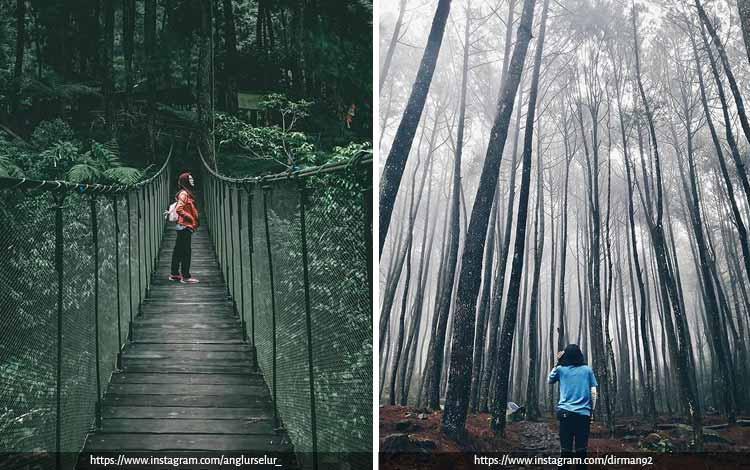 Tempat Wisata Terbaik di Bogor Yang Instagramable - Suaka Elang Loji