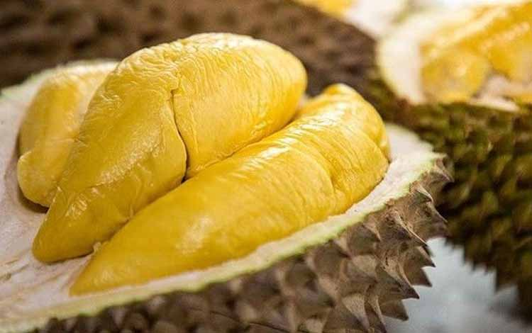 Durian Terenak dan Termahal Di Dunia - Durian Musang King