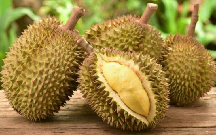 Durian Terenak dan Termahal Di Dunia - Durian Tai Babi