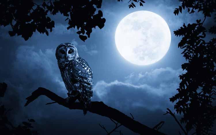 Fakta dan Mitos Burung Hantu - Burung Hantu Lambang Kematian