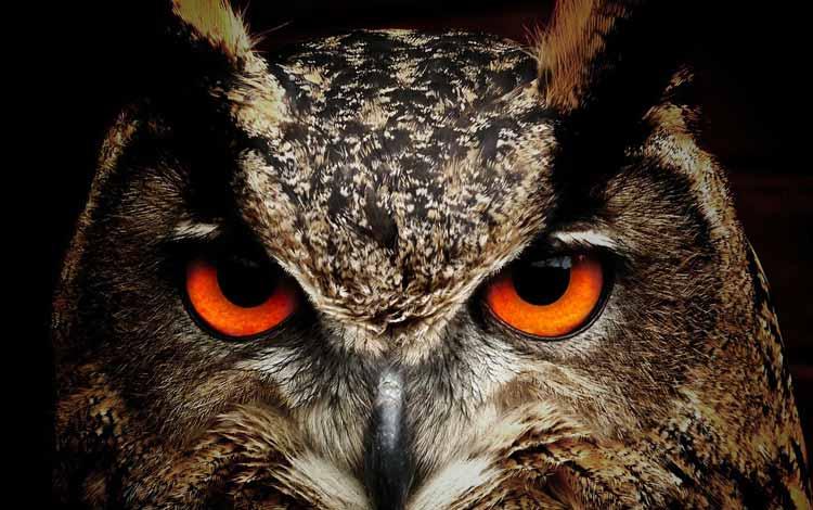 Fakta dan Mitos Burung Hantu - Pemanggil Roh