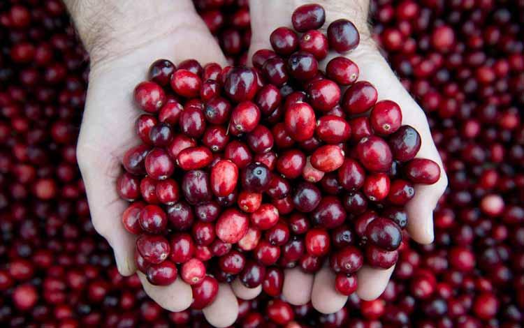 Makanan Yang Dapat Memutihkan Gigi Secara Alami - Cranberry
