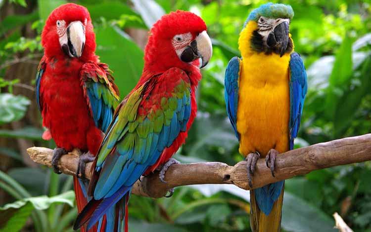 Deretan Hewan Dengan Tingkat Kecerdasan Cukup Tinggi - Burung Kakaktua