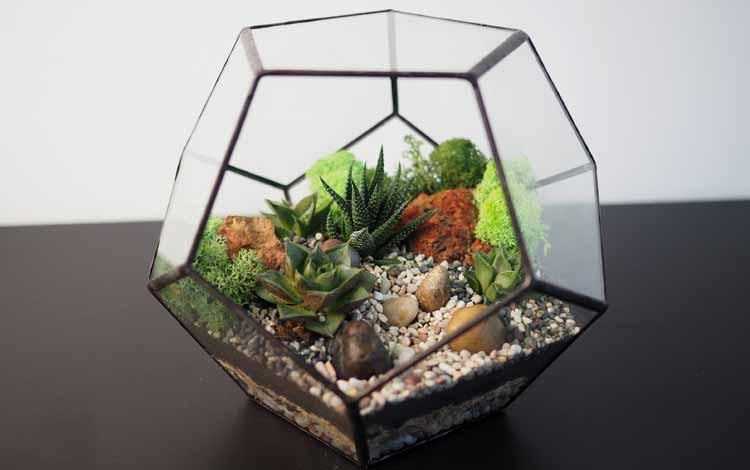 Kado Untuk Sahabat atau Pasangan - Terrarium