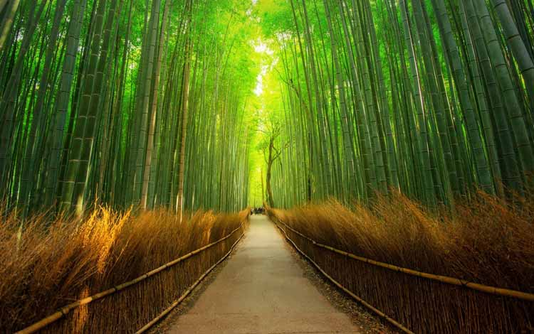 Wisata Terfavorit Di Jepang - Arashiyama