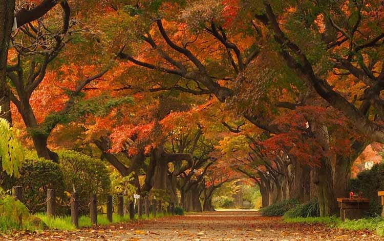 Wisata Terfavorit Di Jepang - Koishikawa Botanical Garden