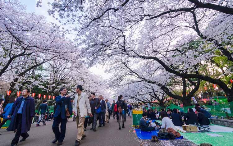 Wisata Terfavorit Di Jepang - Taman Ueno