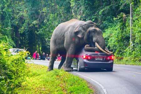 15-Peringkat-Hewan-Pembunuh-Manusia-Terbanyak-Didunia-gajah