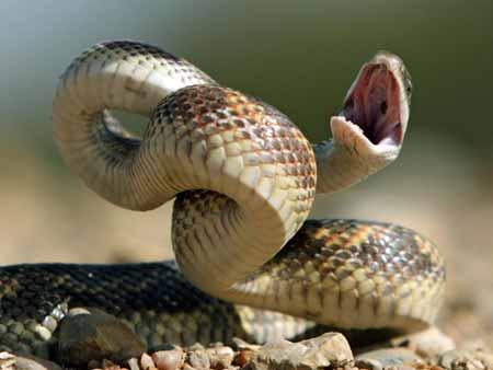 15-Peringkat-Hewan-Pembunuh-Manusia-Terbanyak-Didunia-ular