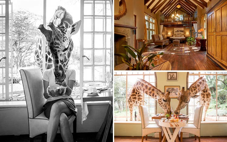 Daftar Hotel Terunik Di Dunia - Giraffe Manor Hotel