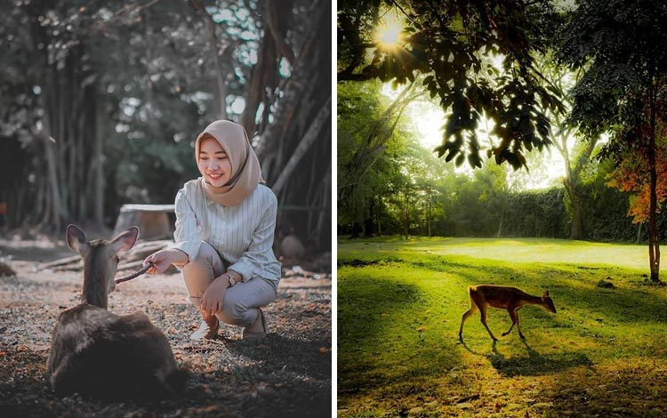 Tempat Wisata Terpopuler Di Solo - Taman Balekambang Surakarta