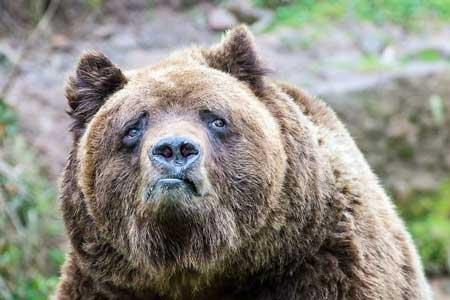 Deretan Ekpresi Lucu Binatang Yang Tertangkap Kamera - Beruang Coklat