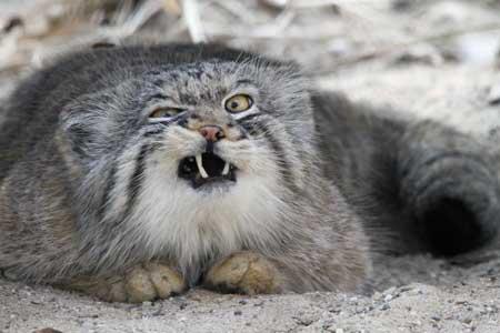 Deretan Ekpresi Lucu Binatang Yang Tertangkap Kamera - Bintang Ekspresi Lucu