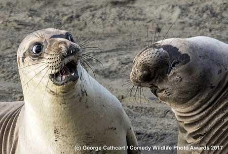 Deretan Ekpresi Lucu Binatang Yang Tertangkap Kamera - Singa Laut